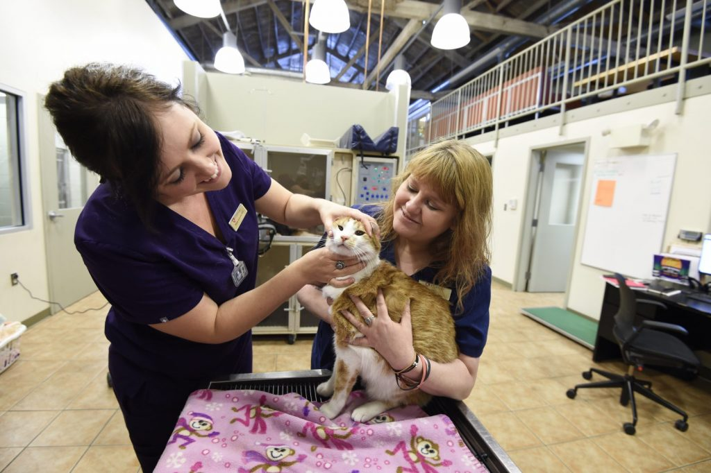 Why Checkups are Essential for the Health of Your Pet