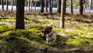 5 Fall Health Tips for Your Dog this November