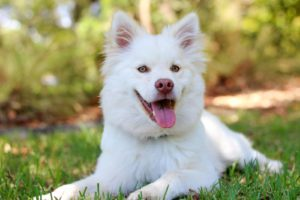 How these Forms of Pain Management Can Help to Provide Comfort for Your Pet