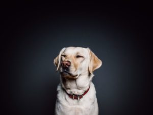 How the Right Vet Can Make a Significant Difference in the Care of Your Pet