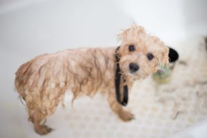 4 Benefits of Regular Bathing for Your Dog