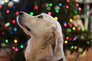 3 Key Reasons to Consider a Microchip for Your Dog in 2019