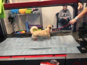 Canine Rehabilitation: A Rising Call