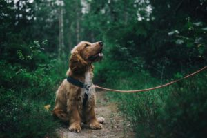 5 Signs of Seasonal Allergies Affecting Your Dog this Spring