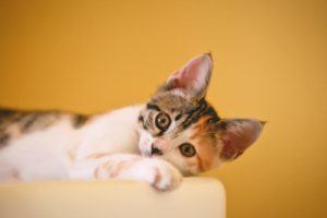 All About Hairballs in Cats