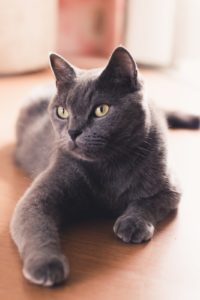 7 Signs that Your Cat is Happy in Your Home