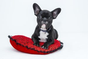 What to Do If Your Dog Has Separation Anxiety