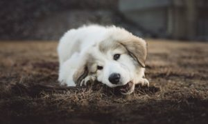 Puppy Teething Info
