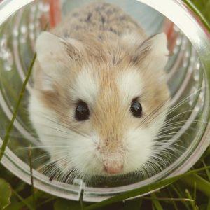 Hamster Preventative Care