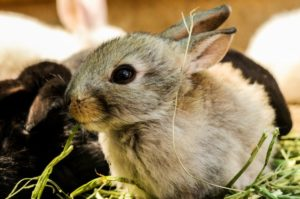 How to Care for a Pet Rabbit