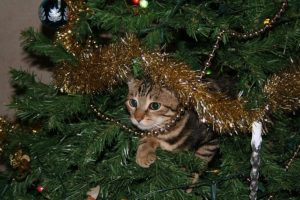 How to Cat-Proof Your Christmas Tree