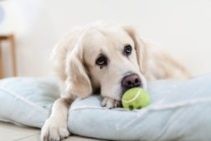 3 Signs of Dog Toothaches