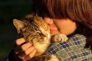 Tips on Caring for an Elderly Cat