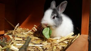 Keeping Your Rabbit Cool in Summer