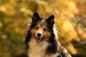 Fall Pet Care Tips