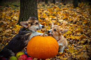 Fun Fall Activities to Do with Your Pet