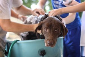 How to Bathe a Dog Who Hates Baths
