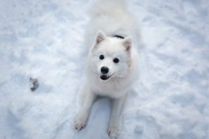 Tips for Exercising Your Dog in Winter