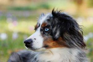 Should You Get a High-Energy Dog?
