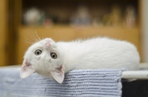How to Care for a Kitten: All the Basics