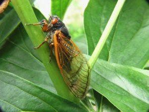 Pet Safety and Cicadas 2021