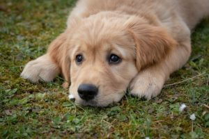 Signs a Puppy Has Worms