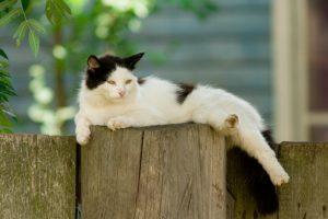 A Cat Summer Cut: Is It Necessary?