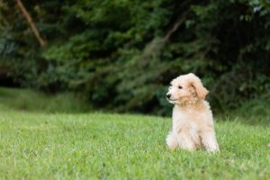 Are There Hypoallergenic Dogs?