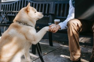 Best Advice for Socializing Dogs